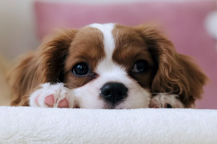 Puppy Proofing Your Home | Pet Insurance | An Post Insurance